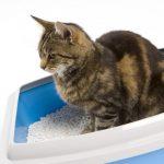 пятнистая кошка в сине-белом лотке