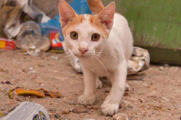 бело-рыжий аравийский котёнок рядом с мусоркой