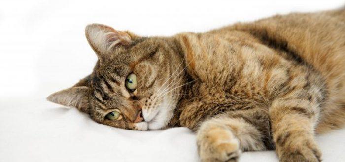 больная кошка с зелёными глазами