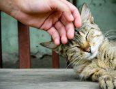 человек гладит кошку