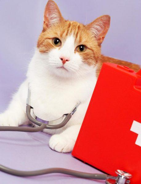 рыже-белый кот и ветеринарная аптечка