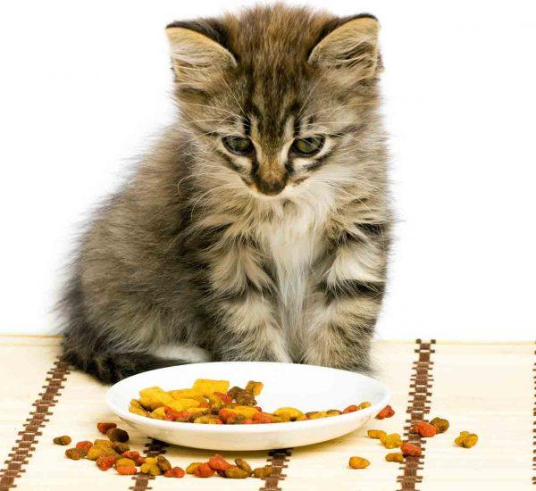 котёнок смотрит на сухой корм