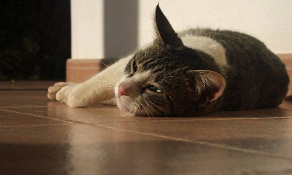 грустная кошка лежит на полу