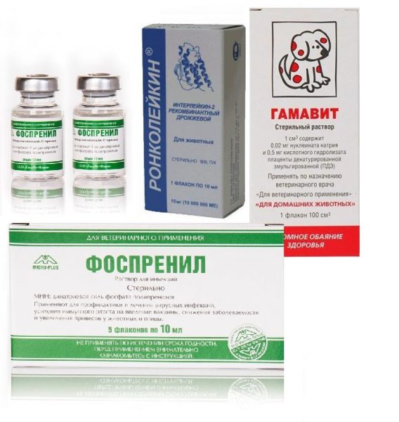 иммуномодуляторы, назначаемые при хламидиозе