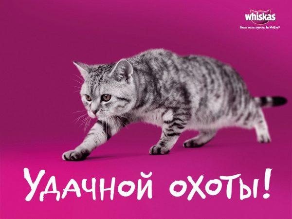 кадр из рекламы вискас с серой кошкой