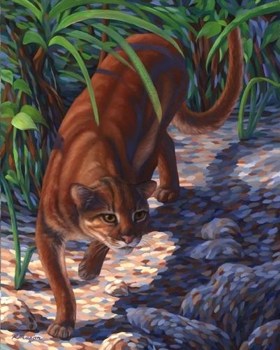 Калимантанская кошка — рисунок