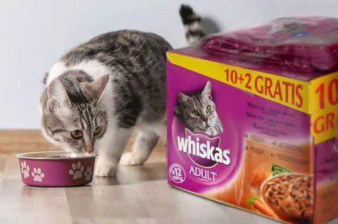Корм для кошек вискас и другие thumbnail