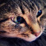кошка плачет