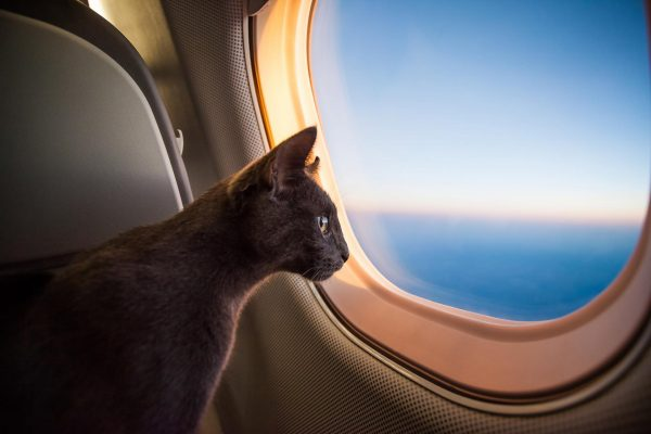 кошка смотрит в иллюминатор