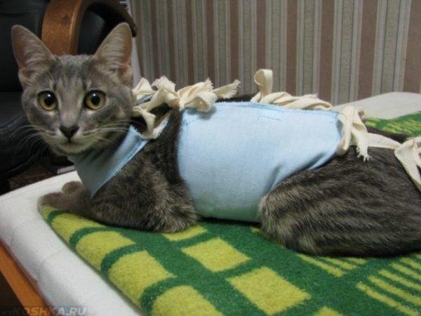 Кошка в попонке