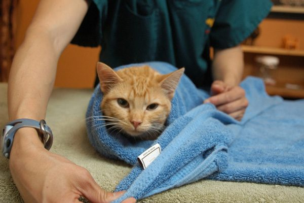 кошку замотали в полотенце