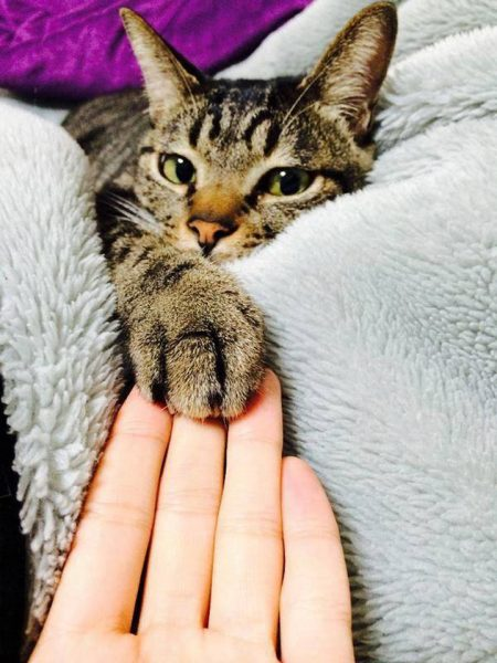 кот положил лапу на руку хозяина