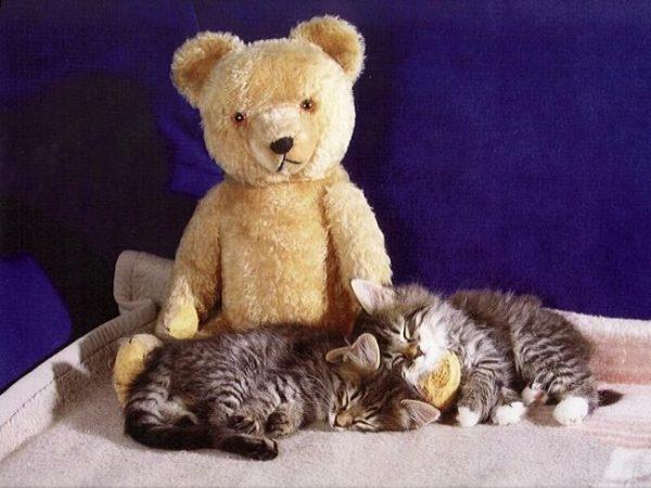 Котята с игрушкой