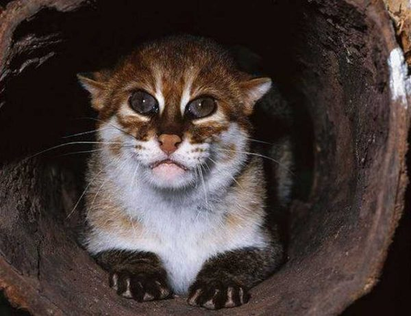 Логово ржавой кошки