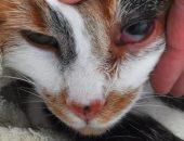 морда кошки с больными глазами