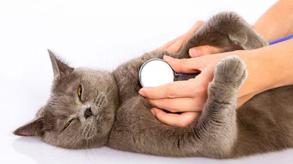 Питомец в ветеринарной клинике
