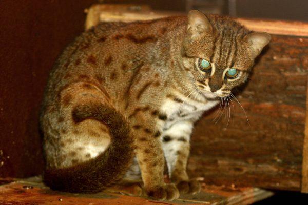 Ржавая кошка ночью