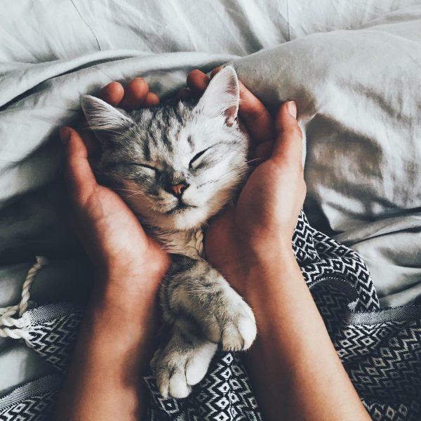 сапящий котёнок в руках