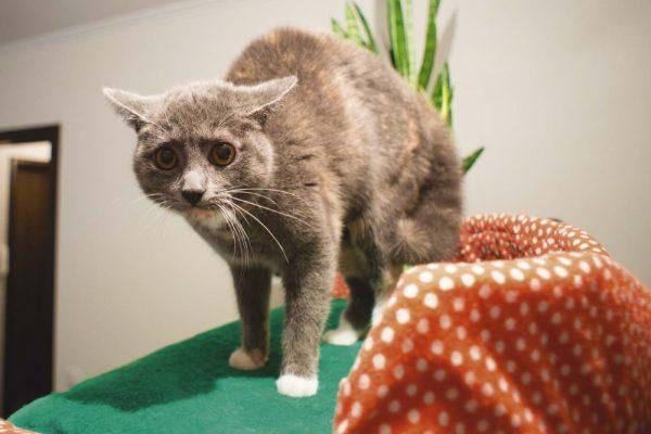 испуганная кошка