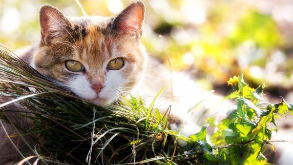 трёхцветная кошка прячется за бревном