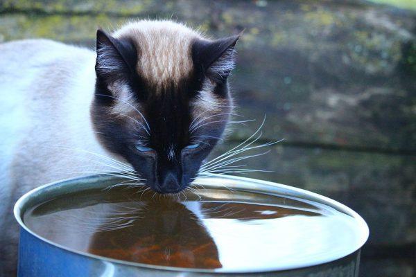 Кот пьёт из большой ёмкости