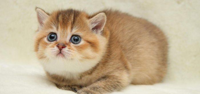2 месячный котенок
