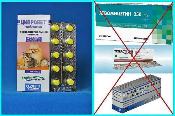 Ципровет и другие антибиотики