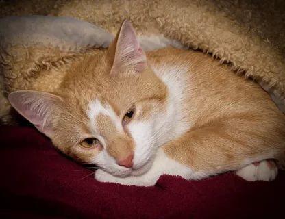Больная рыжая кошка