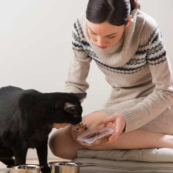 девушка кормит чёрного кота из ложки