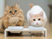 кормление кошки