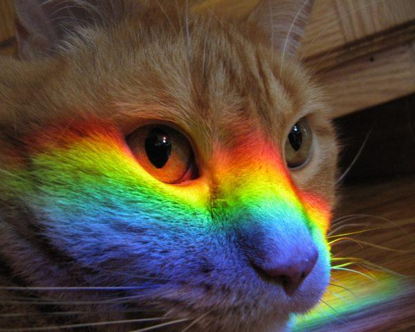 Кошачья морда и радуга на ней
