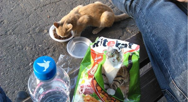 Кошка ест «Китикет» рядом с лавочкой