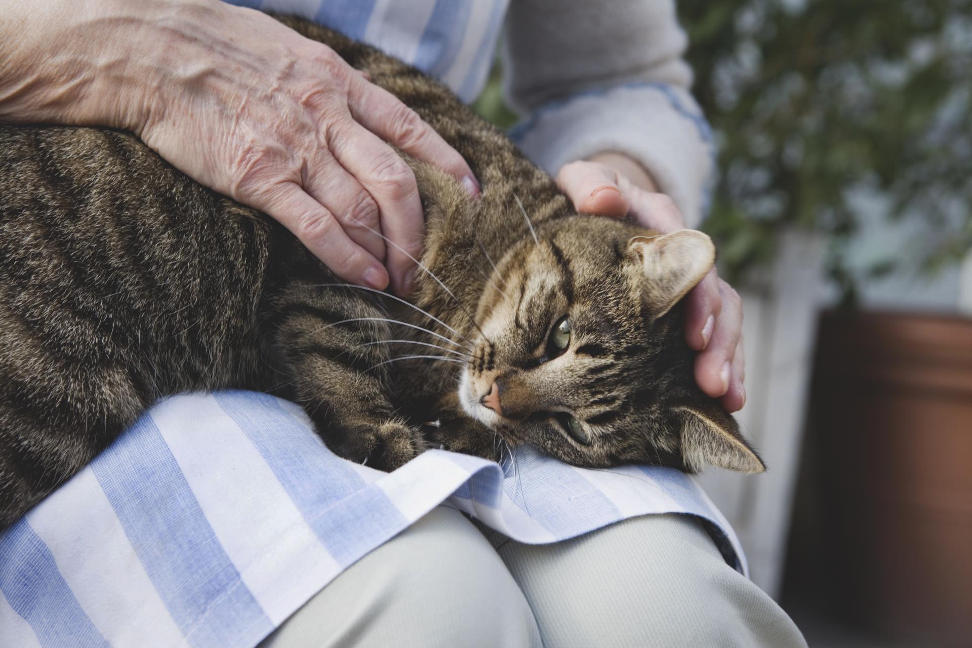 коронавирус у кошек симптомы и лечение короновирусной инфекции