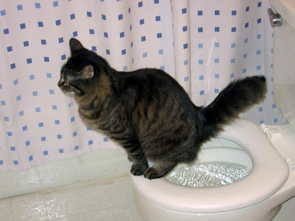 Понос у домашней кошки: кто виноват и что делать