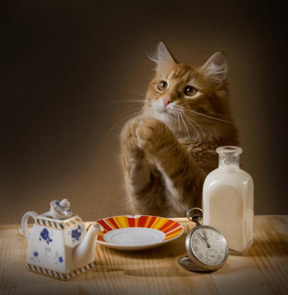 Кошка просит еду