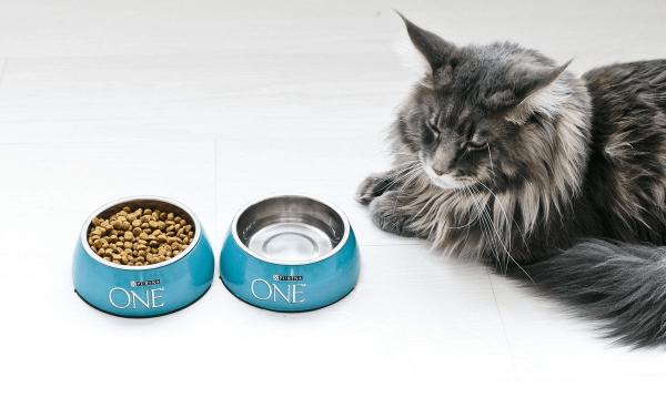 Кот и корм «Пурина Ван»