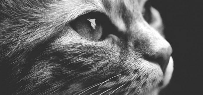 Кот. Не преданность, но привязанность