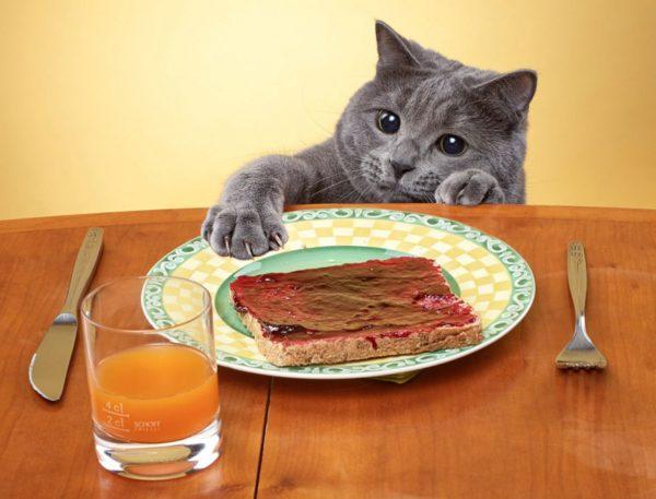Кот пытается украсть бутерброд