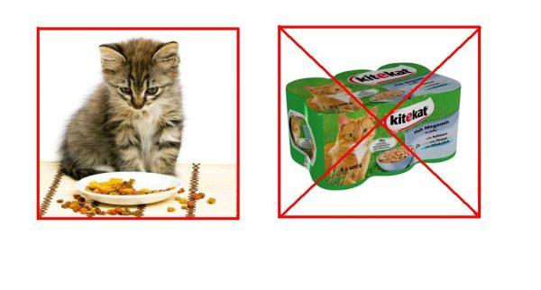Котёнок и «Китикет»