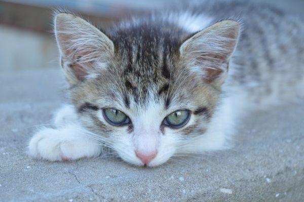 котёнок с грустными глазами