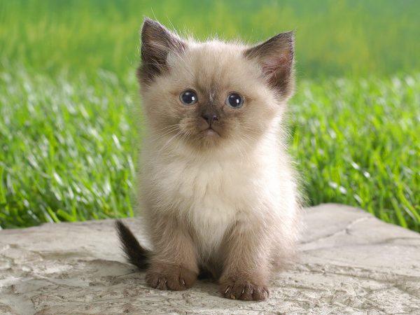 Котёнок в 2 месяца