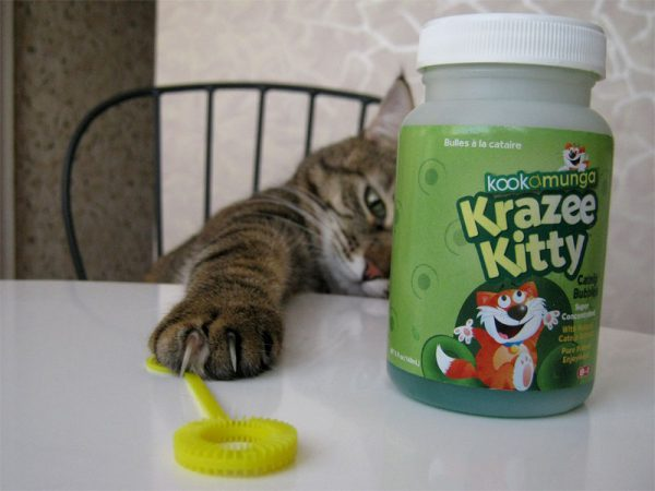 Кошка и баночка с мыльным раствором