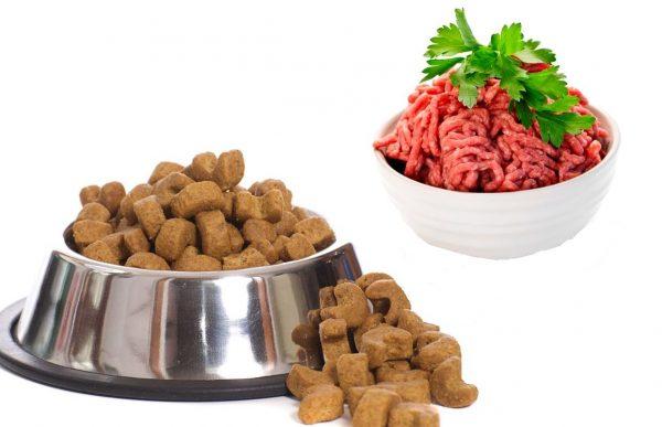 миска с кошачьим кормом и тарелка с фаршем