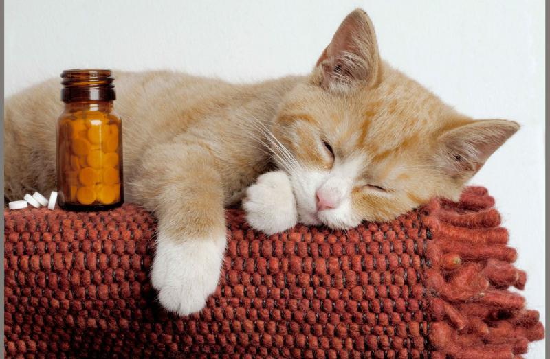 Пиометра у кошек: причины, симптомы и терапия заболевания