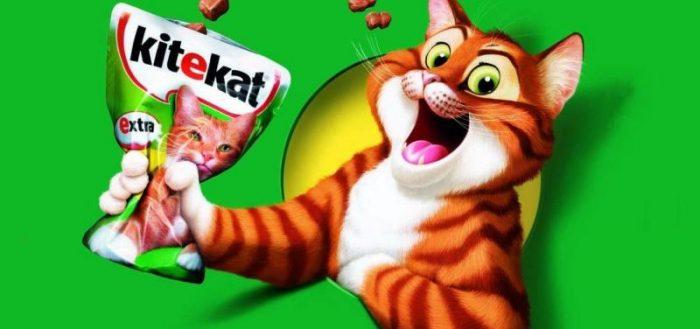 Рыжий кот из рекламы