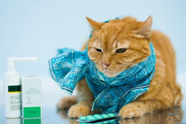 рыжий котик в шарфе