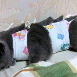 серый кот в попоне