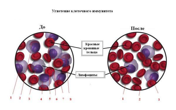 Схема влияния Дексафорта на лимфоциты