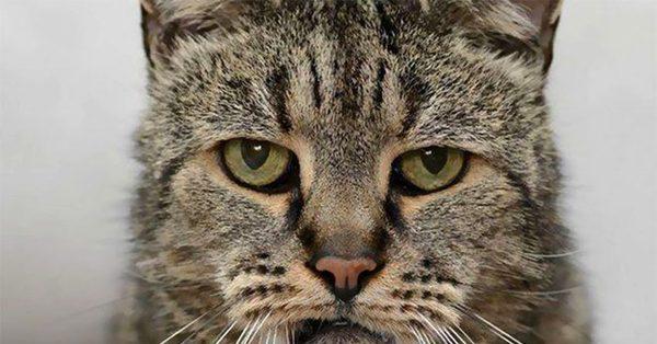 Старый кот смотрит в камеру