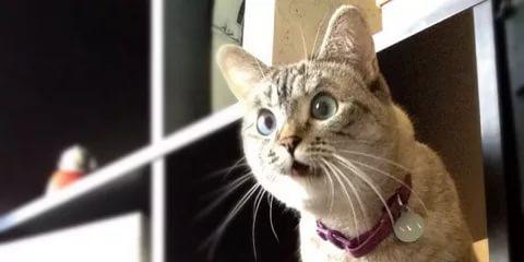 удивлённая кошка на книжной полке